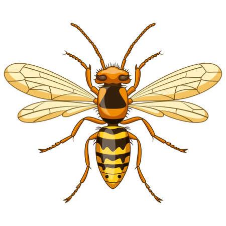 Cartoon wasp insect mascot on white background Ilustrace