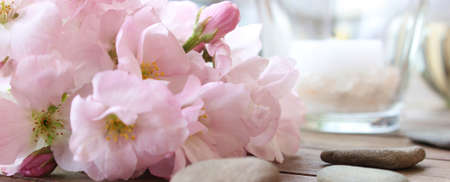 Cherry Blossoms and Wellness