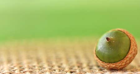 single acorn
