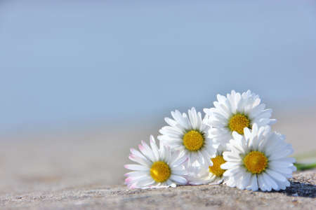well laid: sunny daisies
