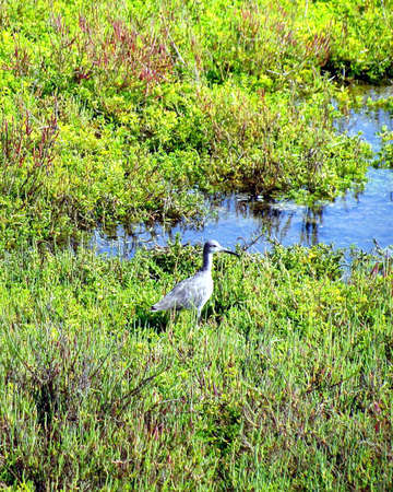 wetland: Bird at the Wetland Stock Photo
