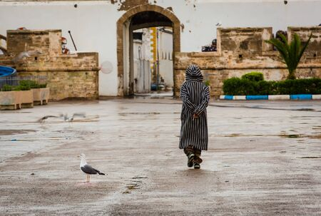 companions: Gulls are permanent companions fishermen. Port of Essaouira, Morocco. Stock Photo