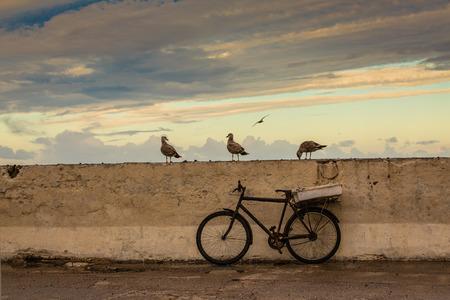 Gulls are permanent companions fishermen. Port of Essaouira, Morocco. Stock Photo