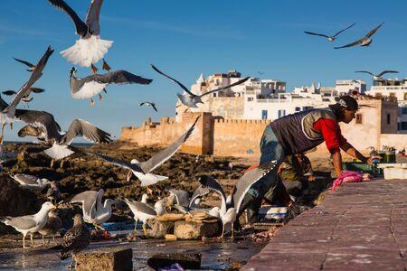 ESSAOUIRA, Morocco - 04 November 2015: Avian and human fishermen in the port of Essaouira Editorial