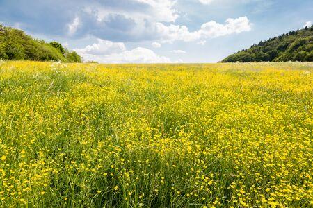 Yellow spring meadow over mining town Banska Stiavnica, Slovakia