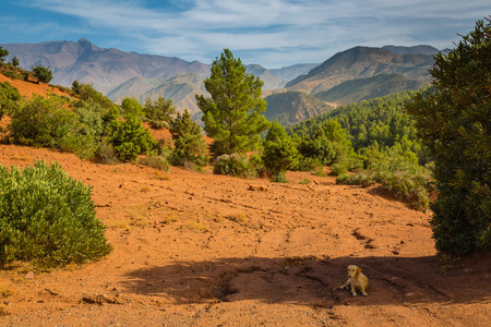 high plateau: High plateau in the Atlas Mountains in Morocco, with the typical red color of the rock.