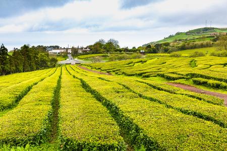 Tea Plantation at Cha Gorreana on Sao Miguel Island, the Azores archipelago in the Atlantic Ocean belonging to Portugal Stock Photo