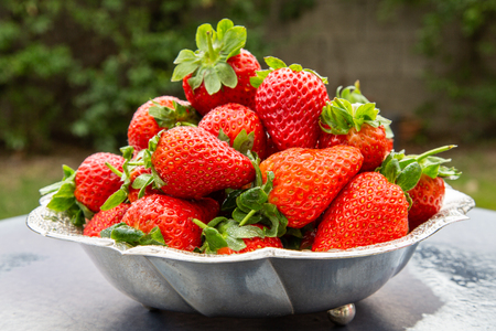 Ripped strawberries in the spring garden Stock Photo