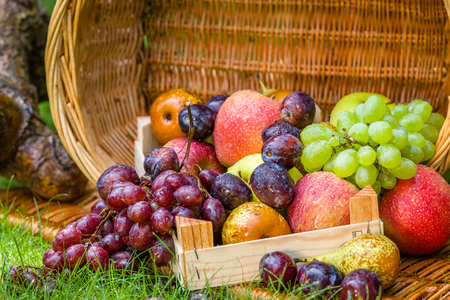 Fruit picking at the end of summer - apples, pears, plums and grapes Stock Photo