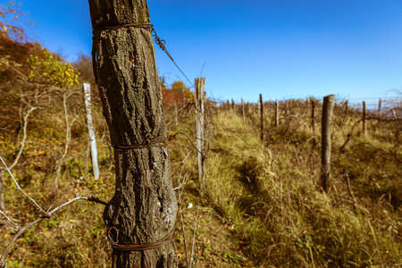 Autumn full of colors. Old vineyard. Hills above the town of Pezinok, Slovakia.