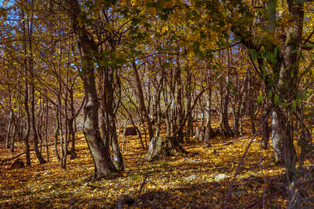 Autumn colors of the forest in the Little Carpathians. Hills above the town of Pezinok, Slovakia.