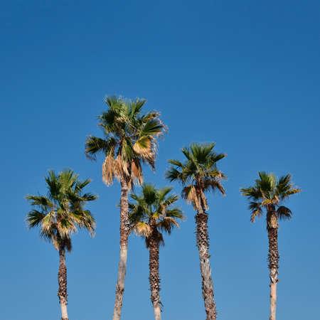 Palm trees family in the sunny day Фото со стока