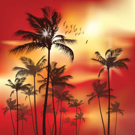 tranquil scene: Palm tree at sunset