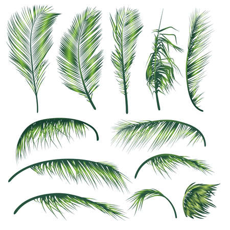 Palm Tree Leaves   A Construction Set of palm tree leaves that allows to make a variety of different palm trees  Vector