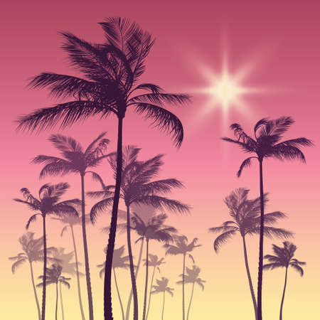 sunset sky: Silhouette of palm tree and sunset sky Illustration
