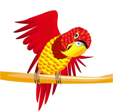 island cartoon: Vector illustration of a red parrot on the branch