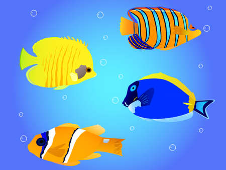 paracanthurus: Detail vector tropical fish collection of butterflyfish, angelfish, clownfish, blue hepatus Illustration