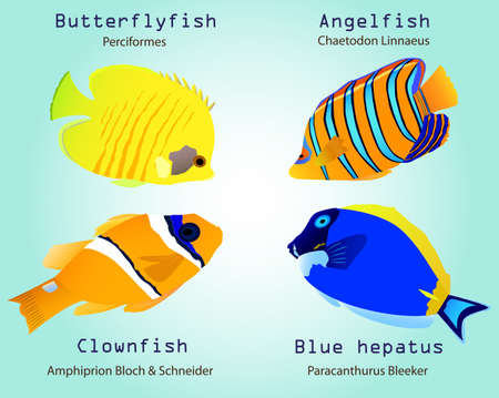 paracanthurus: Detail vector tropical fishes collection of butterflyfish, angelfish, clownfish, blue hepatus