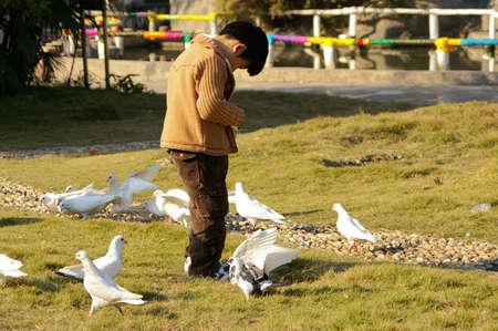 farther: Little boy feeding the dove