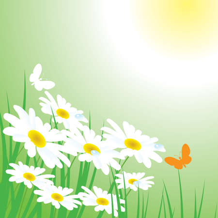 chamomiles on the meadow Stock Vector - 8775996