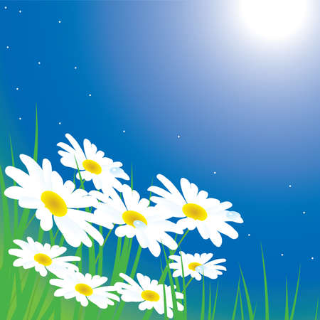chamomiles on the meadow at night Stock Vector - 8775997
