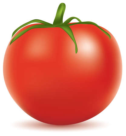 fresh colors: vector illustration of tomato Illustration