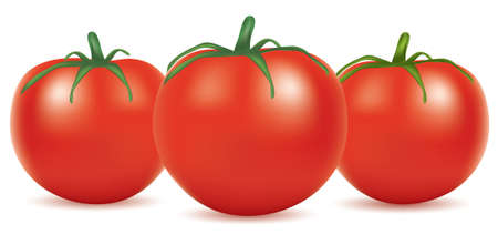 vector illustration of tomatoes Vector