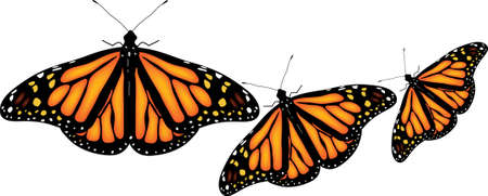 butterfly flying: illustration of colorful butterflies on white background Illustration