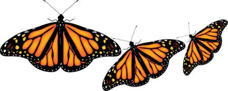 mariposas amarillas: Ilustraci�n de coloridas mariposas sobre fondo blanco