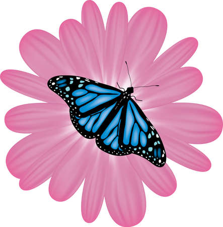 butterfly on a pink flower Vector