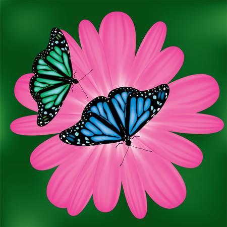 butterflies on a pink flower Stock Vector - 9180106