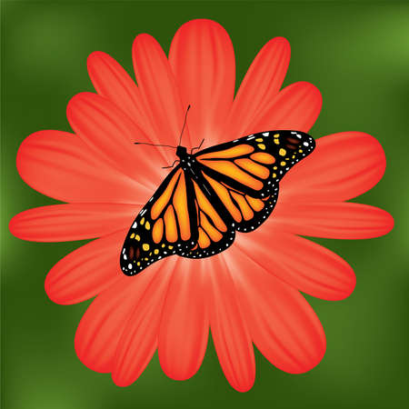 butterfly on a red flower Vector