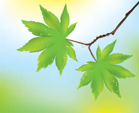 maple leaves and rain drops Vector