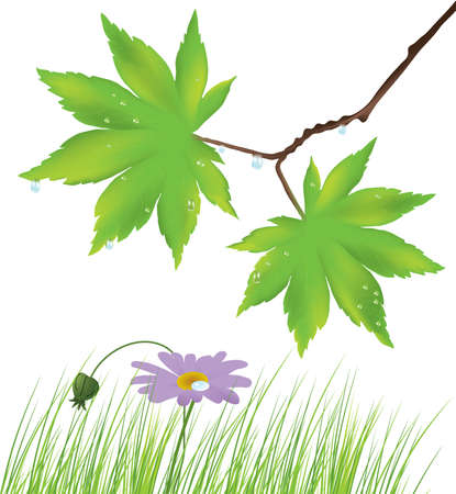 maple leaves, grass and a flower Stock Vector - 9928934