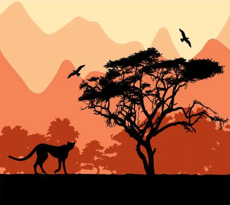 chita: animales salvajes africanos.