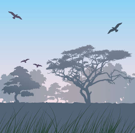 rain forest animal: Forest at sunrise Illustration