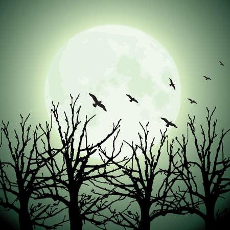 dark woods: vector big moon, trees and birds Illustration