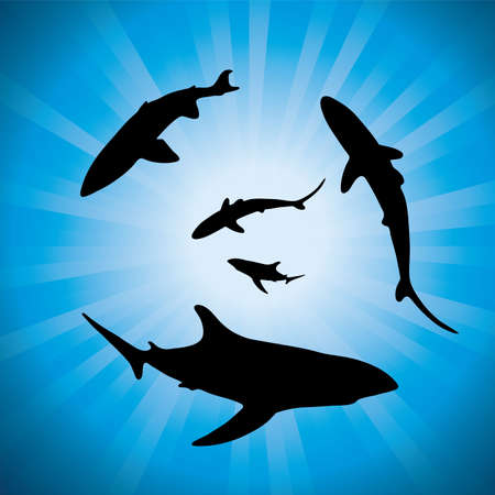 silhouettes of sharks underwater and sunlight.  Vector