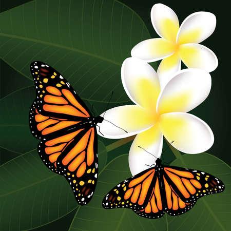 frangipani vettoriali e farfalle