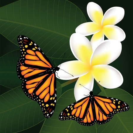 frangipani flower: vector frangipani and butterflies