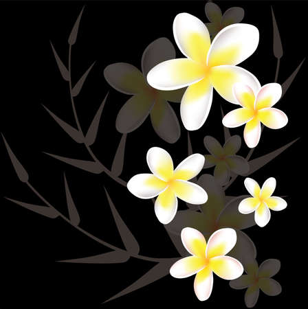 frangipani flower: vector abstract floral background with frangipani Illustration