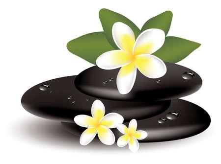 vector frangipani bloemen en natte stenen Stock Illustratie