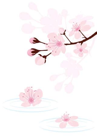 flor de sakura: rama de cerezo sobre el agua