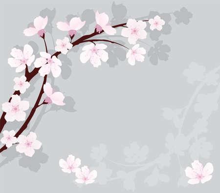 cerezos en flor: rama de cerezo