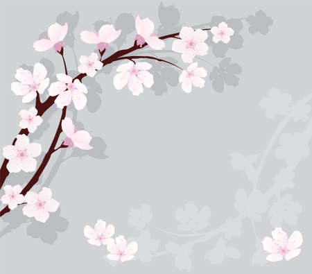 ramo di ciliegio Vettoriali