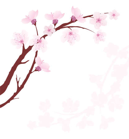 sakura flowers: vector cherry branch