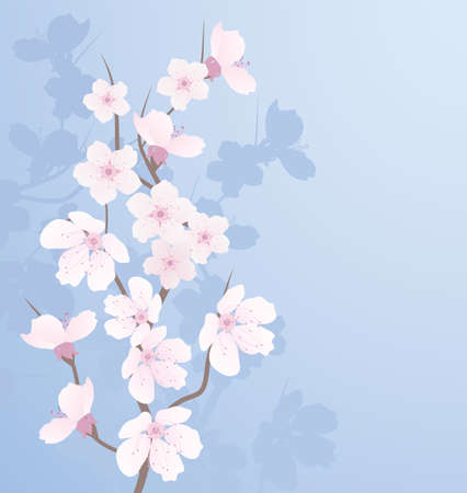 early blossoms: vector cherry branch