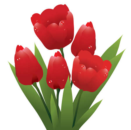 vector bunch of red tulips with water drops Vector
