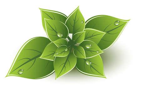 green leaves eco design Stock Vector - 13846419