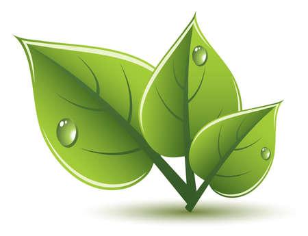 green leaves eco design Stock Vector - 13846380